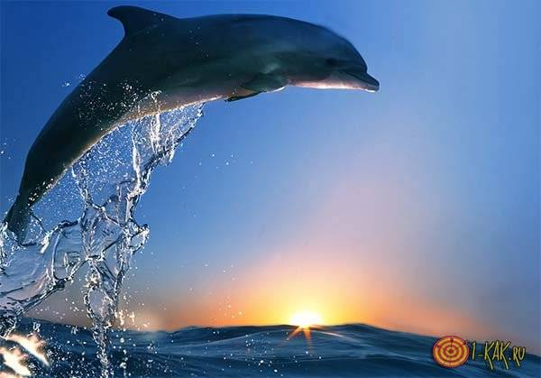 Сонник дельфины в реке. к чему снится дельфины в реке видеть во сне - сонник дома солнца