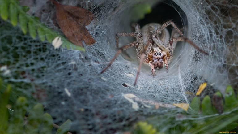 Сонник много больших пауков. к чему снится много больших пауков видеть во сне - сонник дома солнца