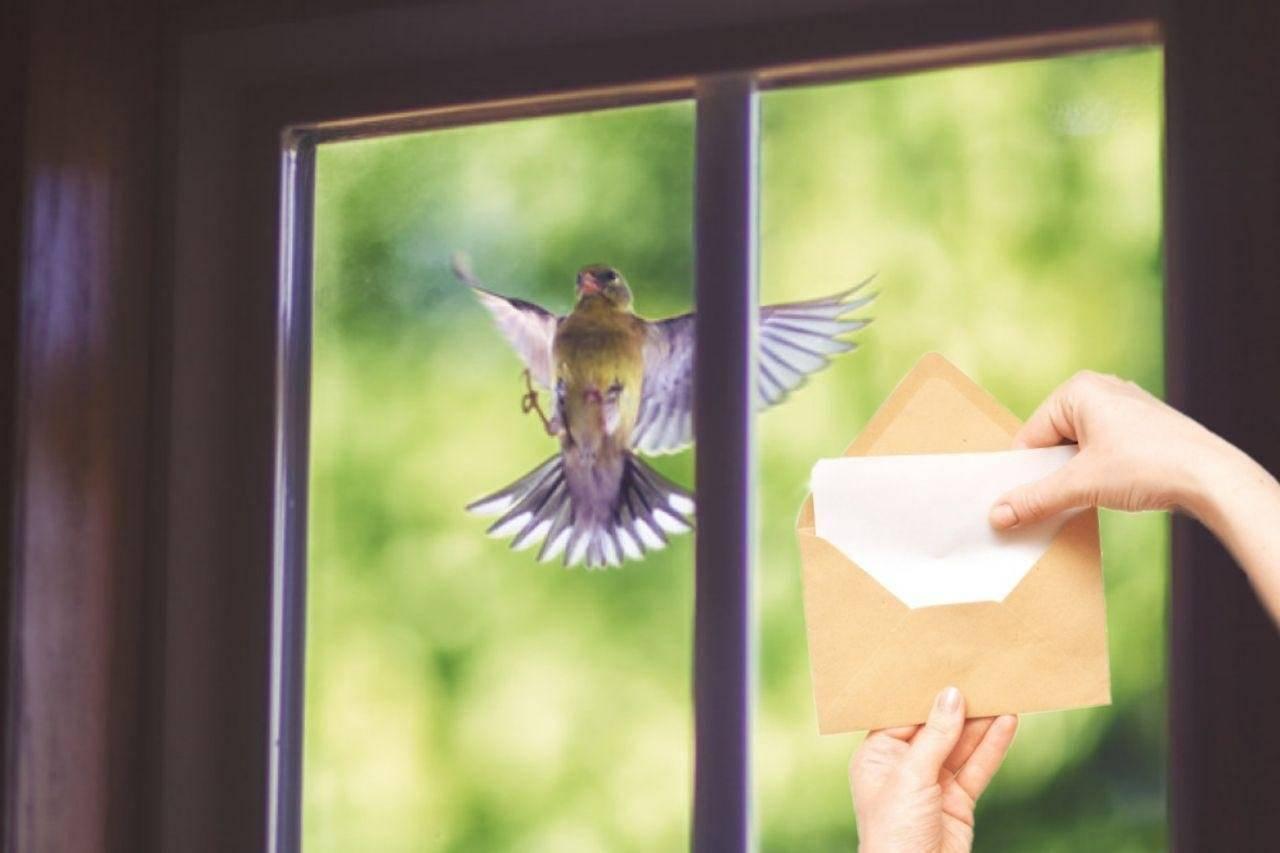 Примета — к чему птица бьется в окно дома или офиса