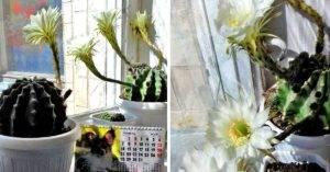 Зацвел кактус - толкование народной приметы
