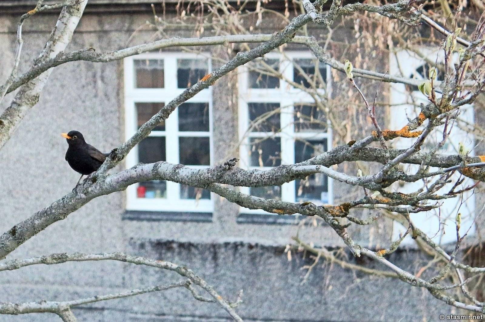К чему птица стучится в окно?