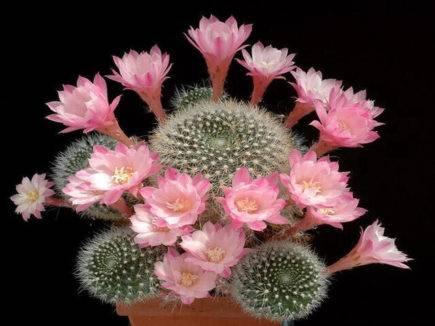 Можно ли дарить кактус - что говорят приметы