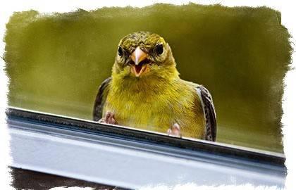 Примета птица накакала на голову — толкование в зависимости от вида пернатой и дня недели