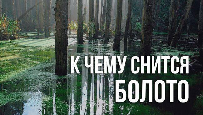К чему снится болото?