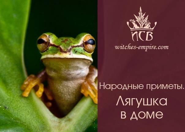 Жаба — приметы