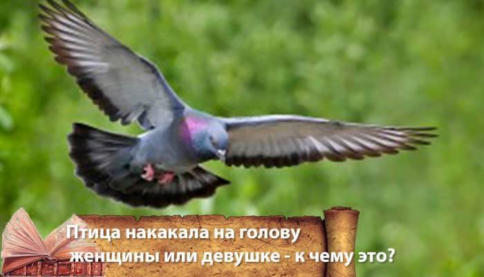 Как растолковать примету, если накакала птица