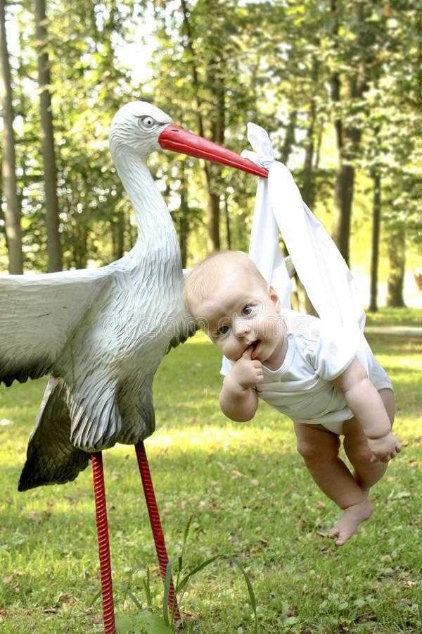 Увидеть аиста — примета к ребёнку и удаче