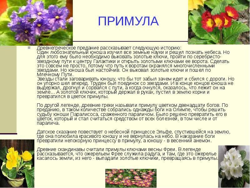 Маленькие рассказы о весенних цветах. старинные поверья о цветах — символах весны. рассказы о весне