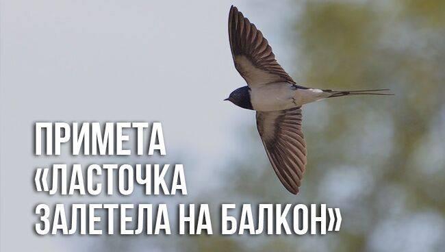 Что по приметам означает встреча с совой