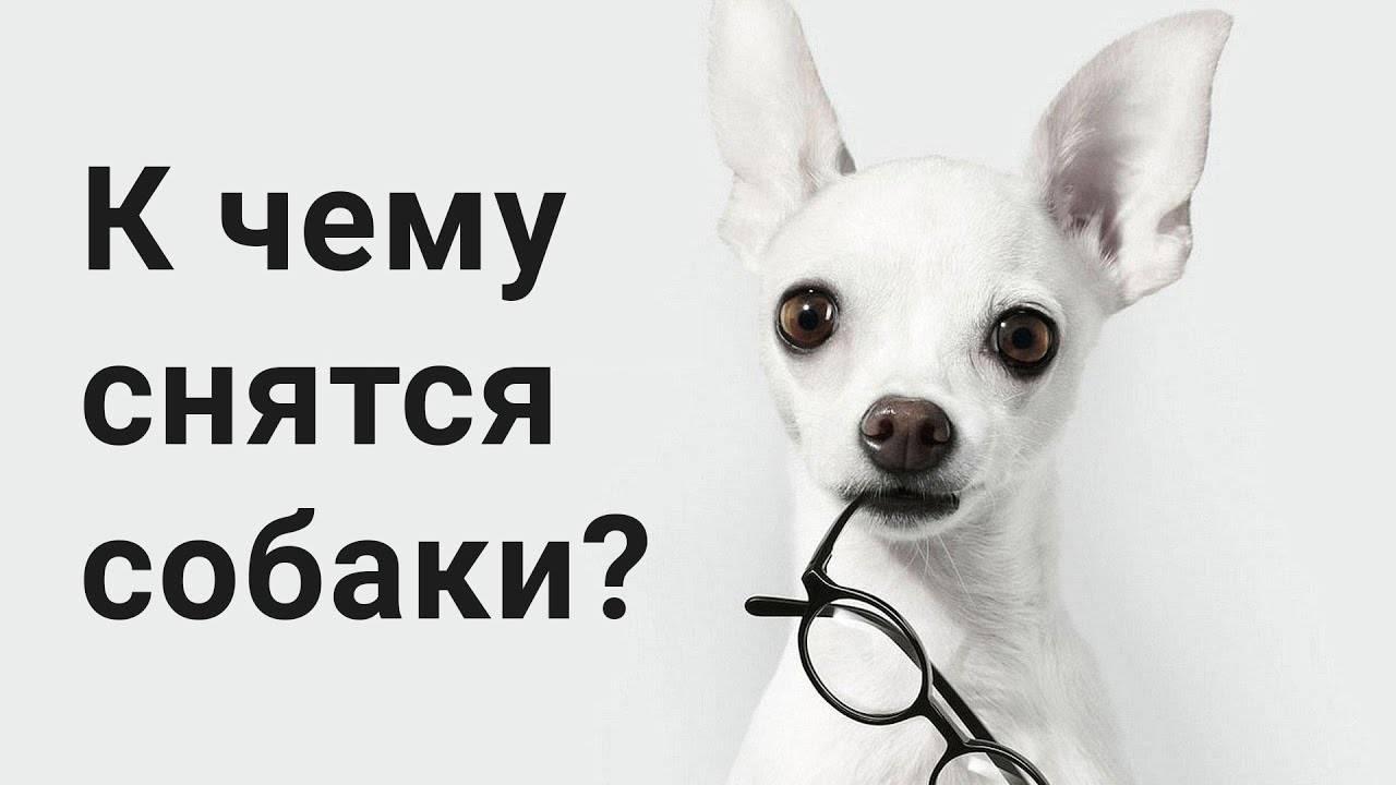 Черно белая собака