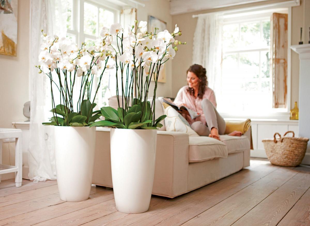 Комнатные цветы: приметы и суеверия, связанные с домашними цветами