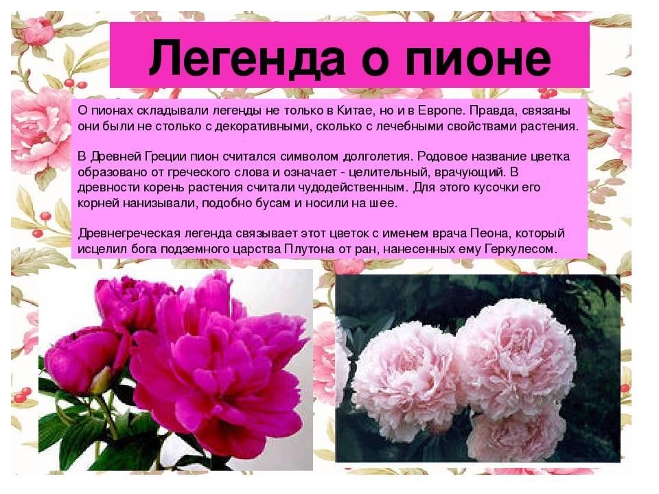 Легенды о самых ранних весенних цветах - подснежниках. старинные поверья о цветах — символах весны легенды о весенних цветах для детей