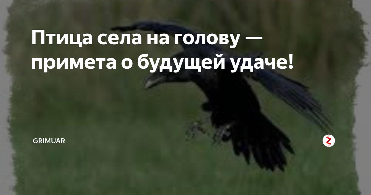 Приметы про соловья, трясогузку, дятла и других птиц - что значит если залетели в дом и другие суеверия приметы про соловья, трясогузку, дятла и других птиц - что значит если залетели в дом и другие суеверия