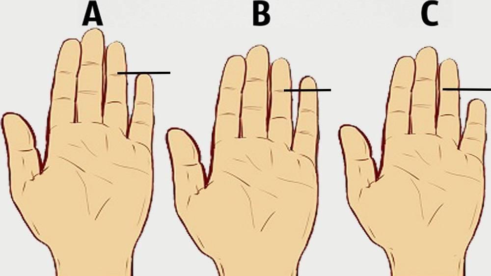 О чем говорит длина пальцев на руках