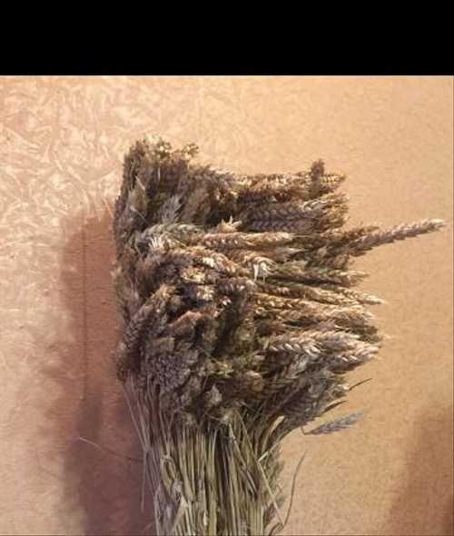 Сонник сноп пшеницы. к чему снится сноп пшеницы видеть во сне - сонник дома солнца. страница 4