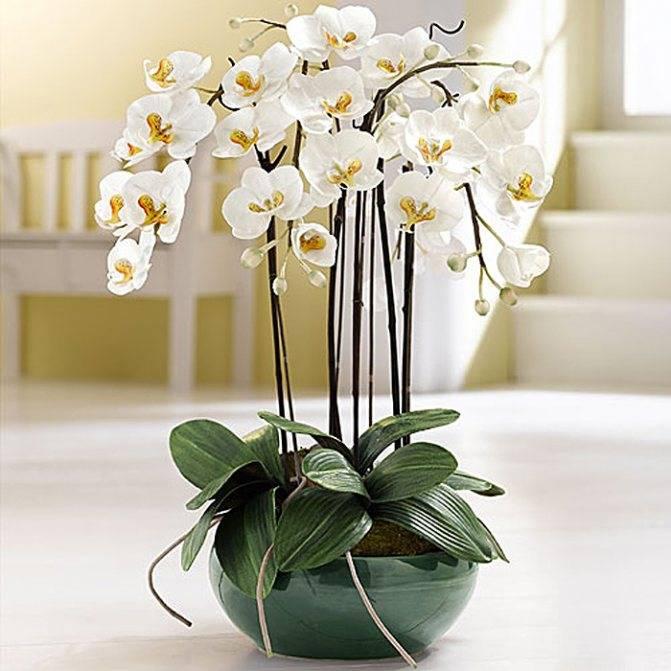 Приметы и суеверия об орхидее в доме