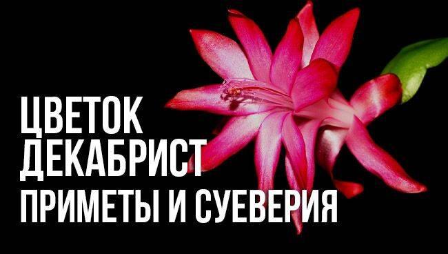 Если дома зацвел кактус, что означает эта примета — узнайте основные толкования