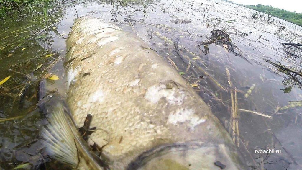 К чему снится мертвая рыба: 9 детальных трактовок сна - сонник мертвая рыба