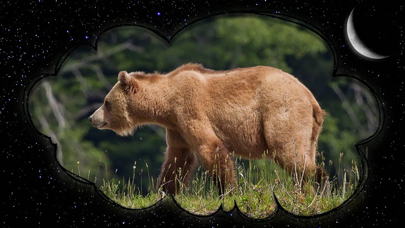 Сонник медведь мужчине. к чему снится медведь мужчине