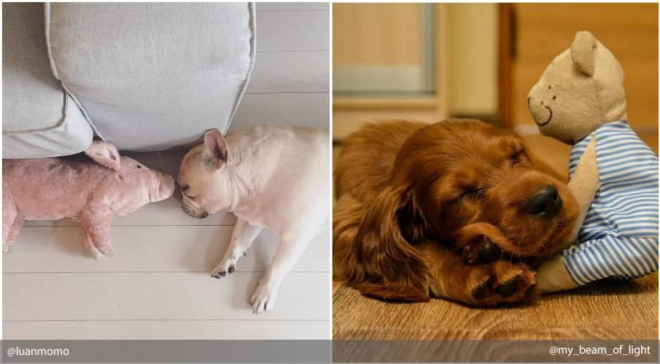 Сонник укусила собака руку. к чему снится укусила собака руку видеть во сне - сонник дома солнца