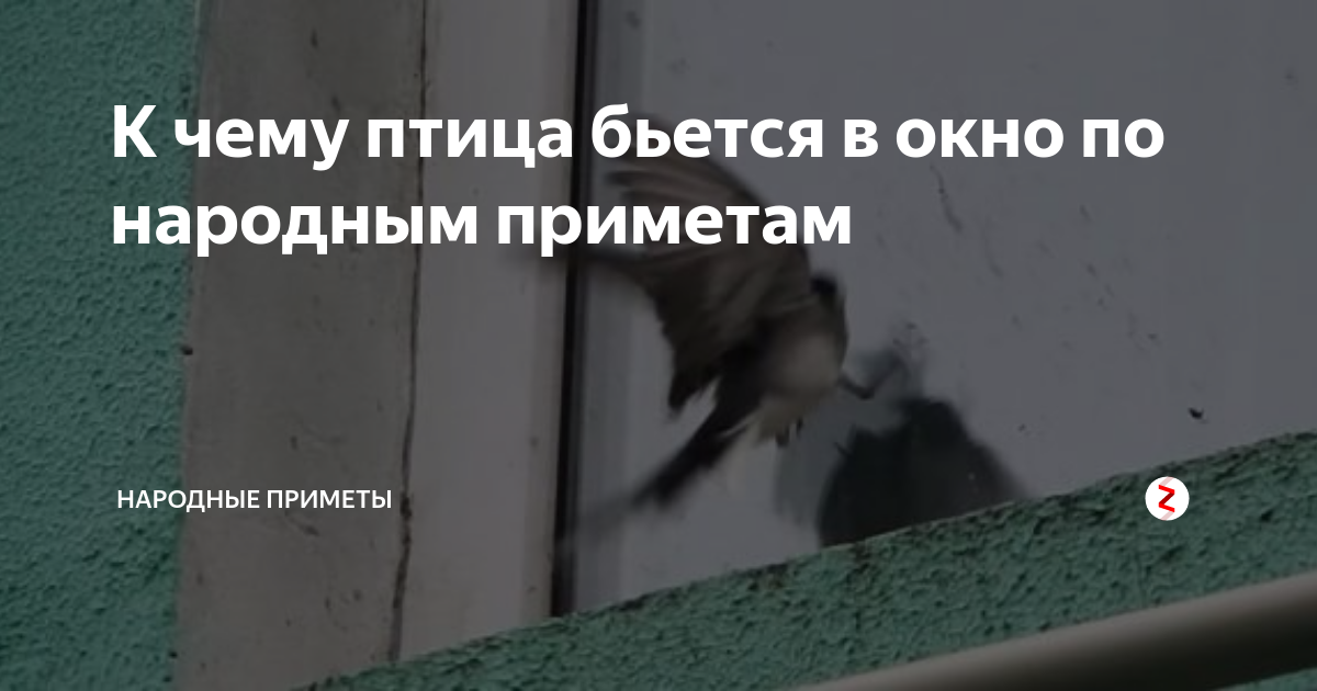 Примета — птица бьется в окно не страшная, а наоборот