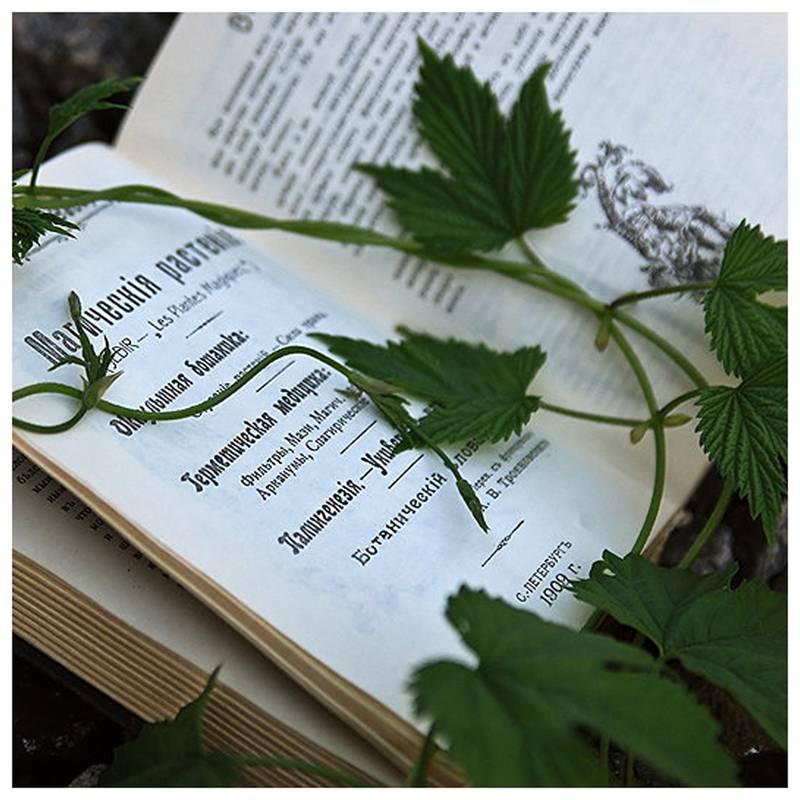 Магические травы и растения: 24 растения для духовной силы