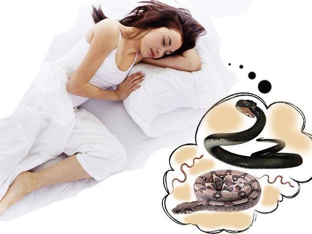 Сонник змеи разные. к чему снится змеи разные видеть во сне - сонник дома солнца