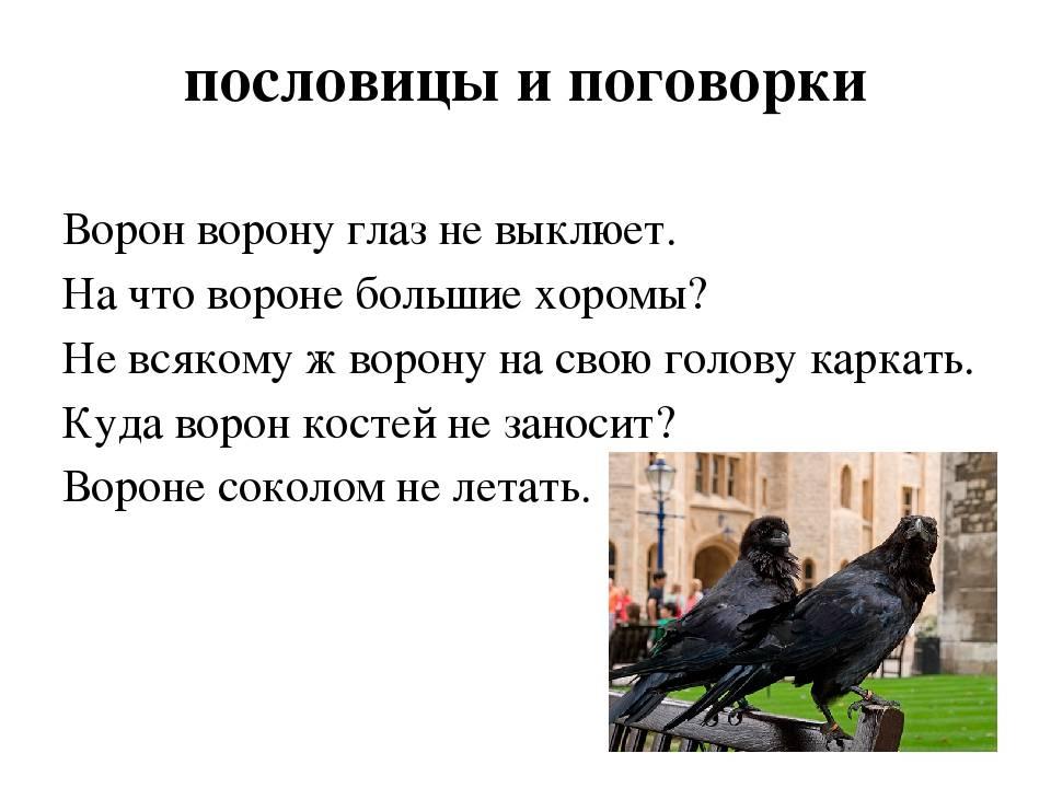 К чему по приметам каркают вороны