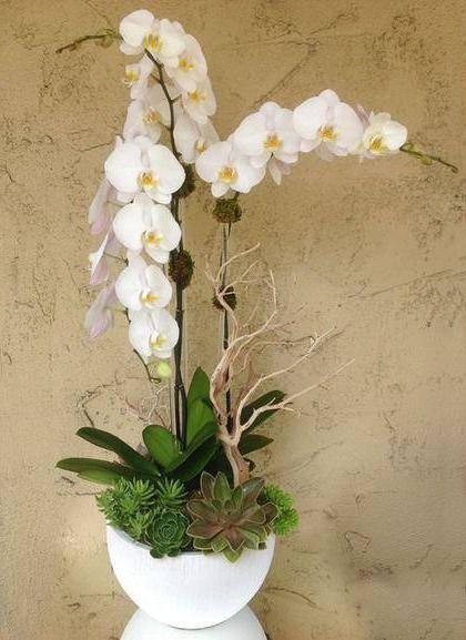 Почему нельзя держать дома орхидеи — все цветы
