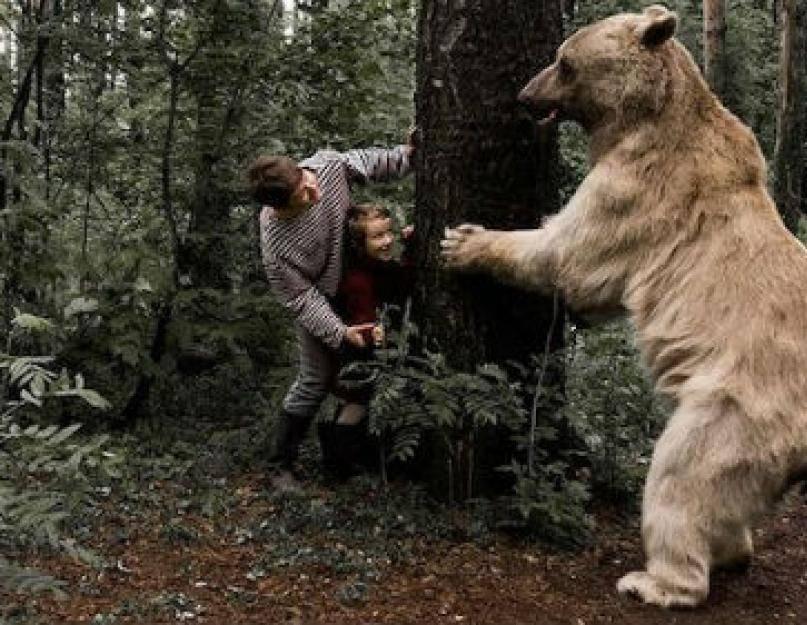 Медведь во сне! к чему снится медведь мужчине. сонник