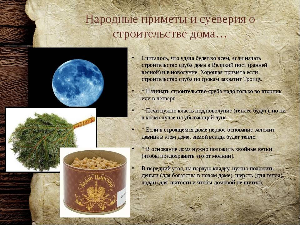 Комнатный цветок ванька мокрый: разновидности, уход, болезни, приметы и суеверия