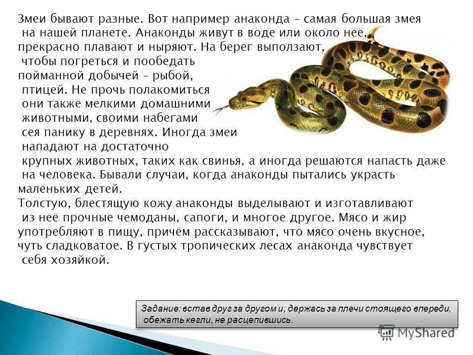 Убить змею и съесть