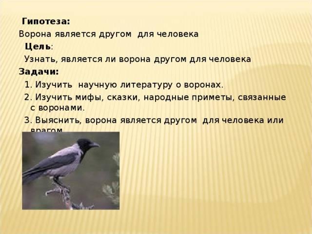 Что по приметам предвещает мертвая птица?