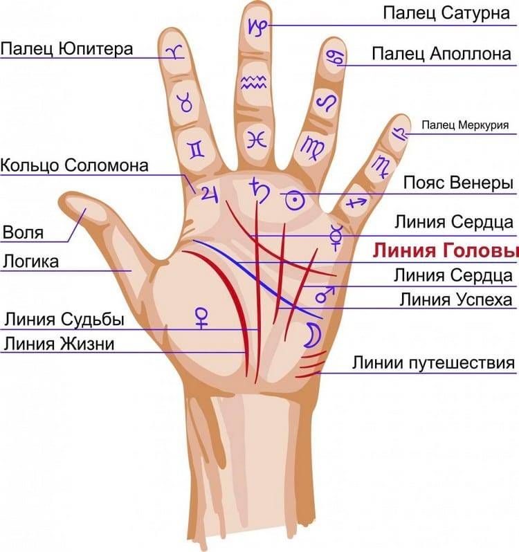 Линия здоровья на руке: значение в хиромантии, фото