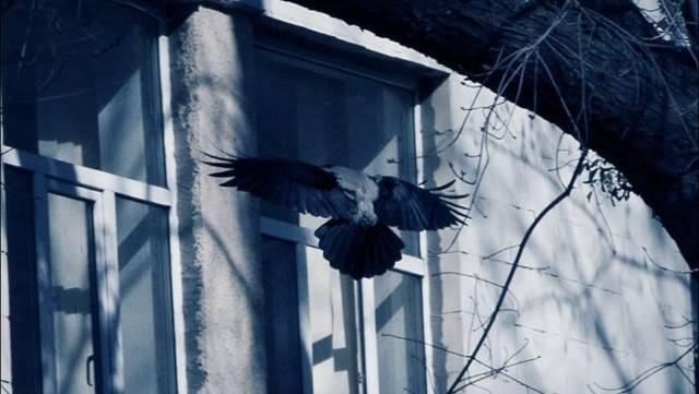 Если птица в окно стучится