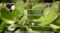 Эхеверия, эчеверия или каменная роза: приметы и суеверия - негативные суеверия