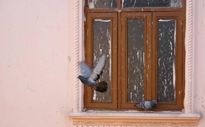 Голубь ударился в окно и улетел: толкование приметы