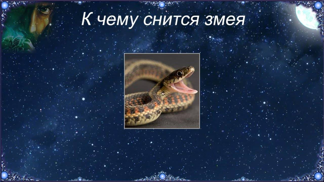 Сонник убить змей. к чему снится убить змей видеть во сне - сонник дома солнца