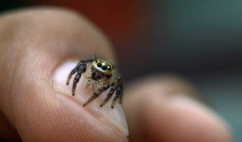 Сонник паук насекомые. к чему снится паук насекомые видеть во сне - сонник дома солнца