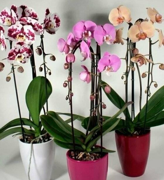 Орхидея дома — суеверия и приметы про мой любимый цветок