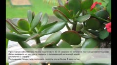 Целебная сила дерева. как деревья нас лечат | fresher - лучшее из рунета за день
