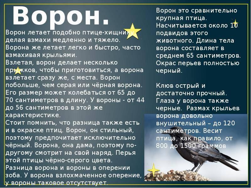 Приметы про ворон — что поведает мудрая и хитрая птица? | бытовая магия | яндекс дзен
