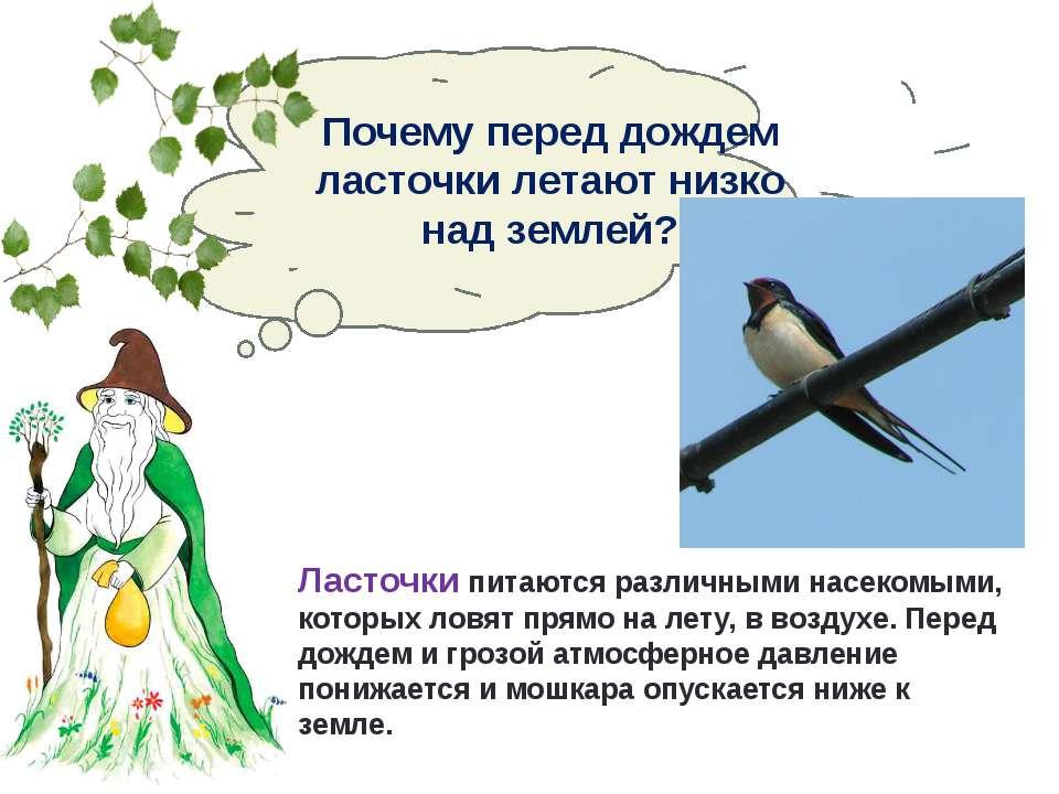 Приметы почему ласточки летают низко или высоко