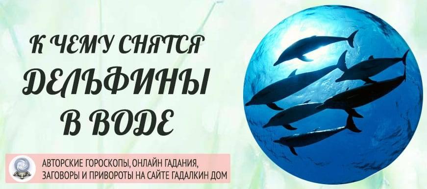К чему снятся дельфины: маленькие, белые, черные, мертвые, много, в море, воде, чистой, реке, бассейне, плавать, кататься, кормить