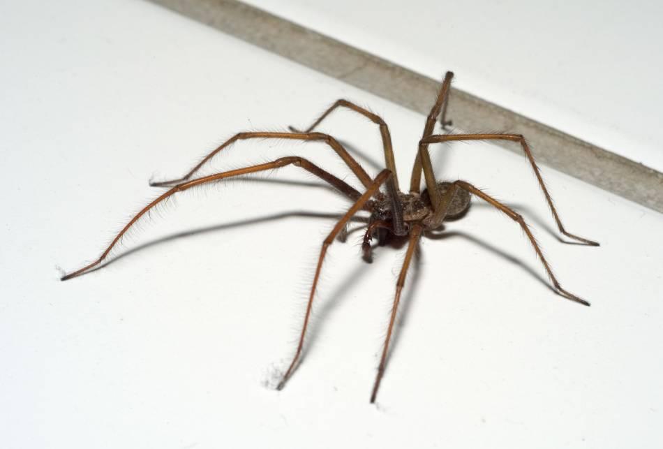 Приметы о пауках: как наши предки трактовали появление пауков дома?