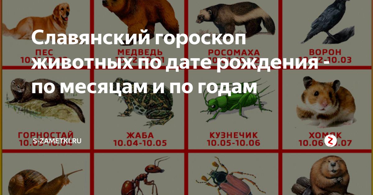 2020 год по славянскому календарю — какой он будет, и что приготовил нам прядущий мизгирь