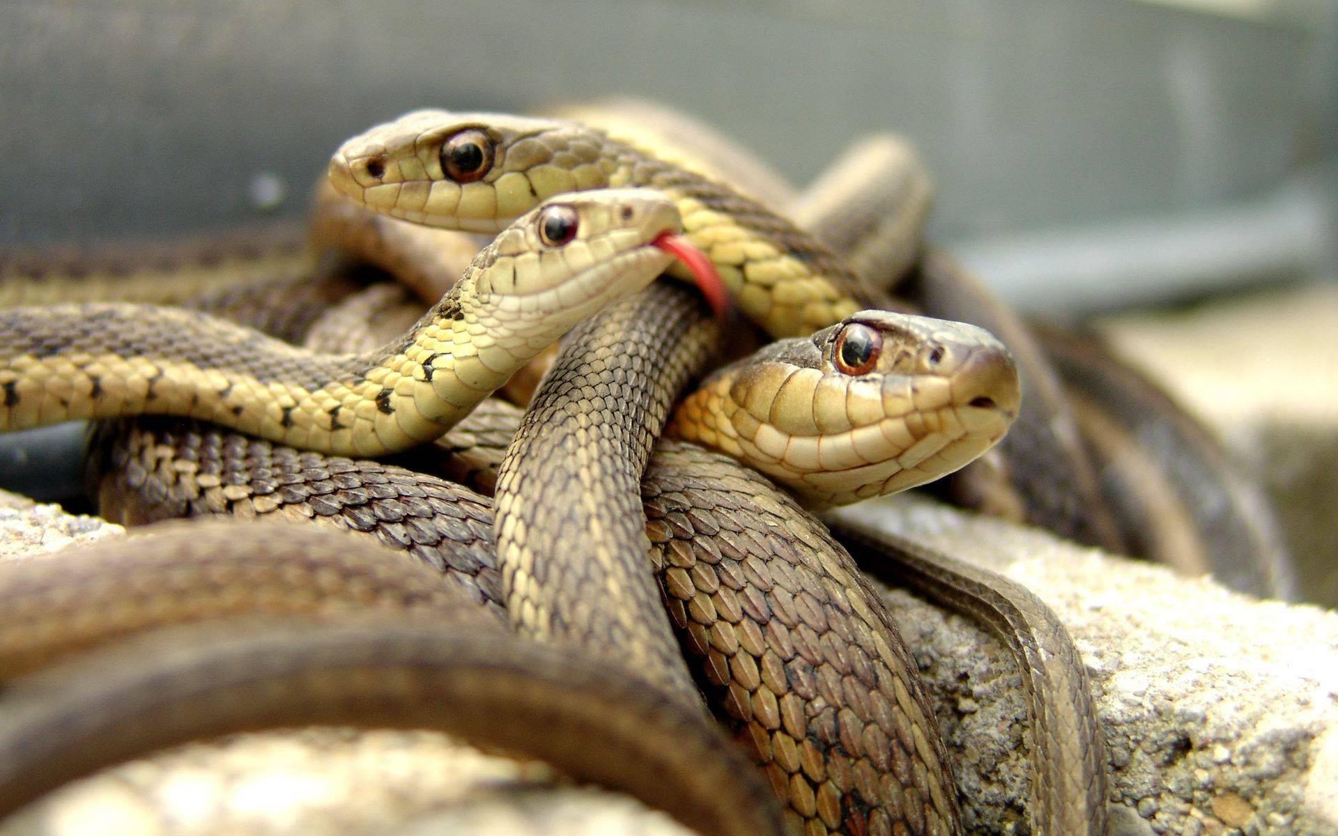 Сонник мужчине приснилось змея. к чему снится мужчине приснилось змея видеть во сне - сонник дома солнца