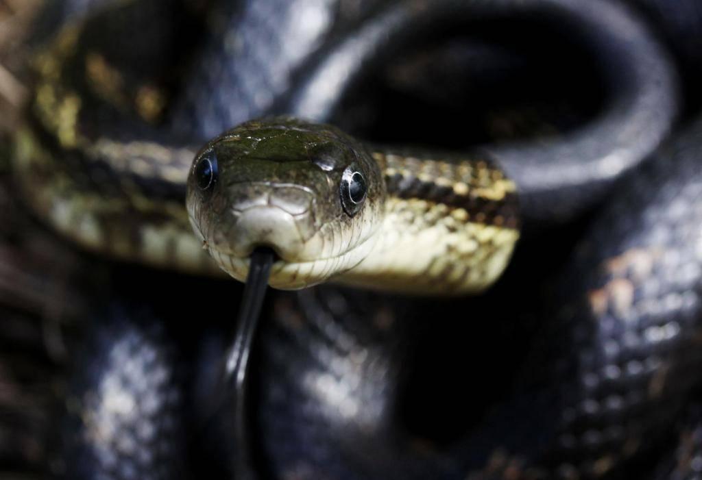 Сонник укус ядовитой змеи. к чему снится укус ядовитой змеи видеть во сне - сонник дома солнца