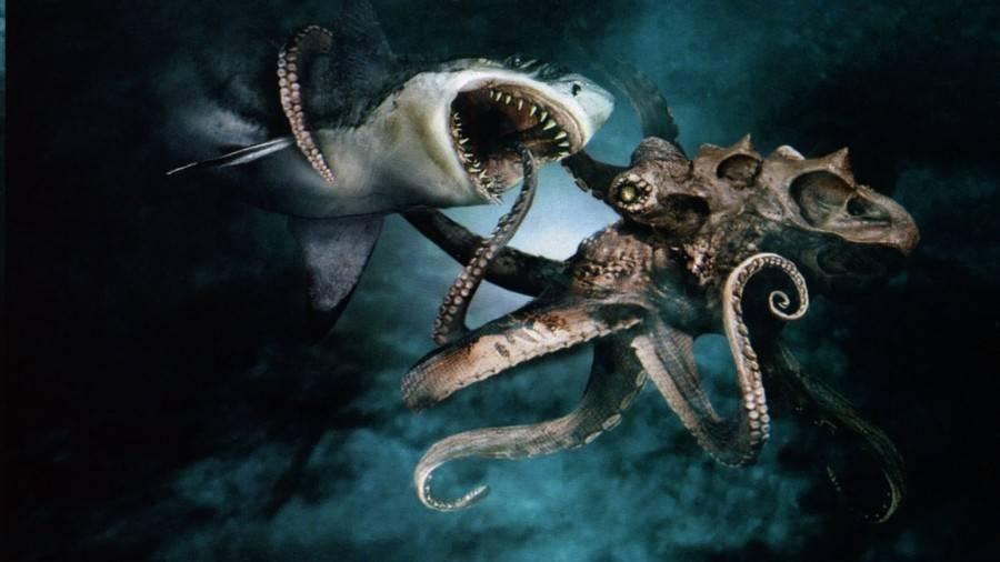 Самый большой кальмар в мире: описание, история и интересные факты