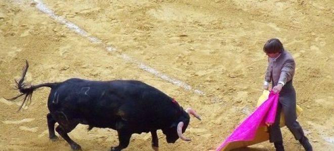 Сонник бык. к чему снится бык во сне женщине и мужчине